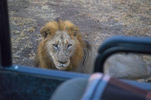 LionUpClse.jpg
